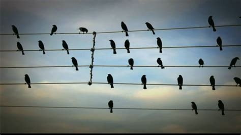 One morning while reading a newspaper, jarbas agnelli saw a photograph of birds on an electric wire. Rhythm - Experiencing Architecture