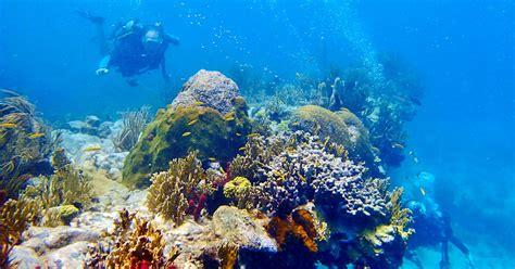 scuba diving st thomas  tank morning boat dive