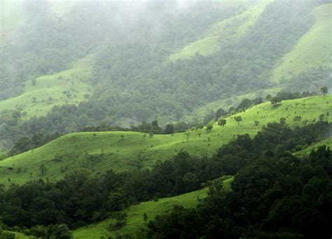 eastern and western ghats file shola grasslands and forests in the kudremukh