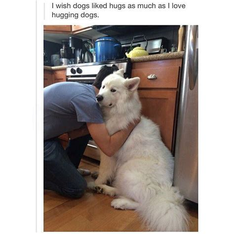 Frowning Dog Meme - when pets don t like it when you hug white husky retriever frowning grumpy cat face cute