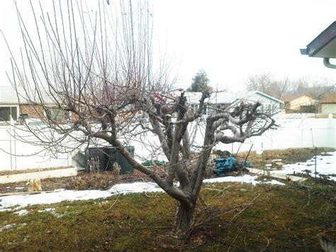 Xericoasis Fruit Tree Pruning
