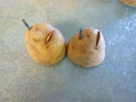 potato battery driven led
