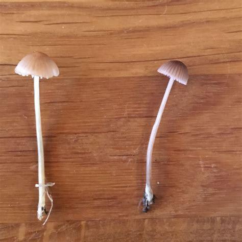 sind das fuer pilze  unserem garten giftig mushrooms