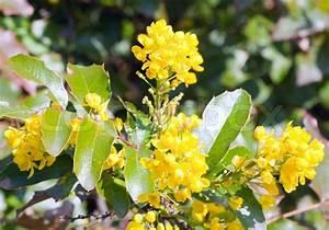 Busch Mit Gelben Blüten : sch ner fr hling pflanze mit gelben bl ten makro stockfoto colourbox ~ Frokenaadalensverden.com Haus und Dekorationen