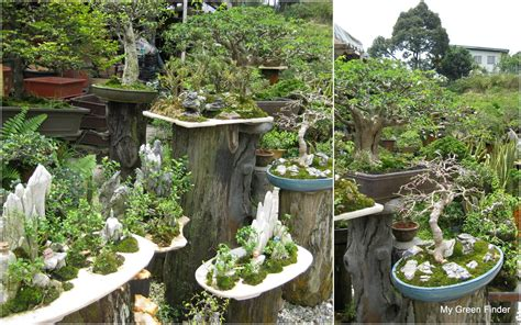 Garden Vendors by My Green Finder Plant Vendors Sanfong Bonsai Garden
