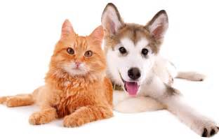 cats and dogs selfish cat loyal funniest wallpapers hd