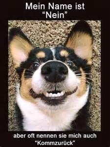 hundesprüche lustig 1000 ideen zu hund sprüche auf welpenzitate und hundesprüche