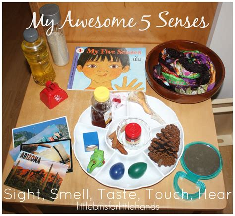5 senses activity preschool learning about senses science 5 | 5 senses activity discovery table set up sight smell taste touch hear