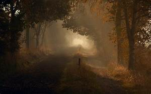 Nature landscapes roads trail path trees forest autumn ...