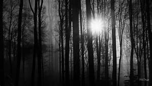 Download Dark Woods Wallpapers HD Free | PixelsTalk.Net  Dark