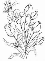 Coloring Bouquet Flowers Bouquets sketch template