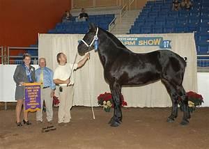 How Soon Does Clenbuterol Work In Horses