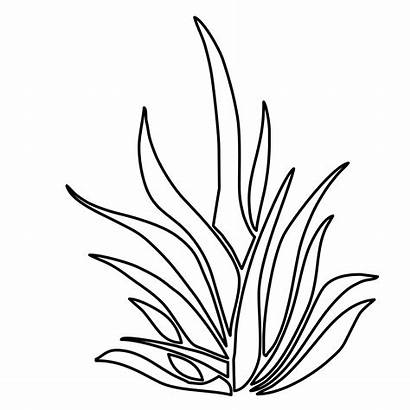 Plants Coloring Pages Seaweed Drawing Plant Underwater