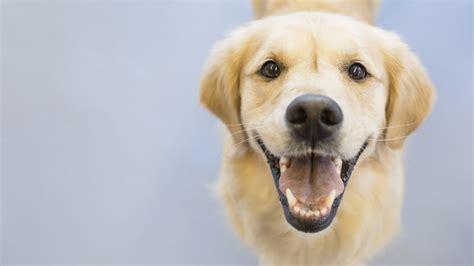 fido   default    dog