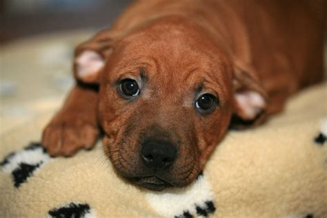images nature sweet puppy animal cute canine