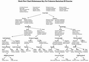 Dichotomous Key Chart Flow Chart For Unknown In Microbiology Microbiology