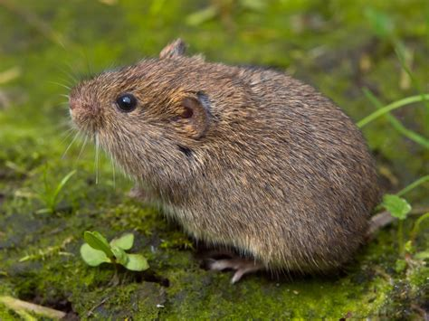 Mole Problem? Vole Problem? Here's How To Treat Both