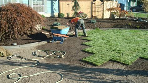 lawn laying cost image gallery laying sod