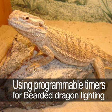 using programmable timers for bearded dragon lighting