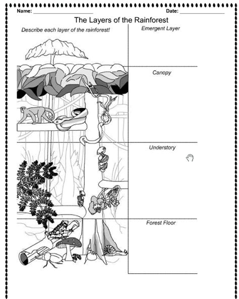 images   worksheet  preschool rainforest layers worksheet summer kindergarten