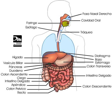 Anatomia y Fisiologia « Biologia5