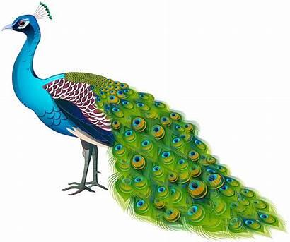 Peacock Transparent Clipart Yopriceville Birds Background Bird