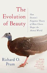 The Evolution Of Beauty  How Darwin U0026 39 S Forgotten Theory Of