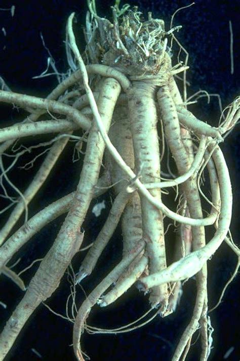 What Is Astragalus Root? Uses And Side Effects. Internet Providers Denver Co. Current Exchange Rates Dollar To Euro. Traditional Roth Ira Calculator. Document Storage Facilities Window Las Vegas. Moving Company Vancouver Bc Fixed Rate Loan. It Certifications Online Develop Andriod Apps. Landscaping Business Software. New York Lawyer Directory Twu Dental Hygiene
