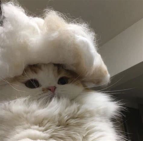 Image About Aesthetic In Cat Memes By 𝘫𝘶𝘴𝘵 𝙖𝙡𝙞𝙘𝙚