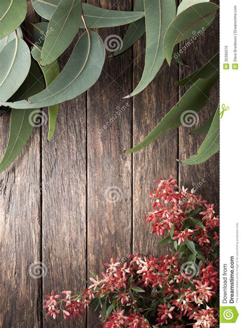 australian flowers summer gum leaf background stock photo