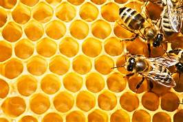 Scientist unveils blueprint to save bees and enrich farmers…