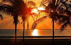 nl74 vacation summer sunset palm tree