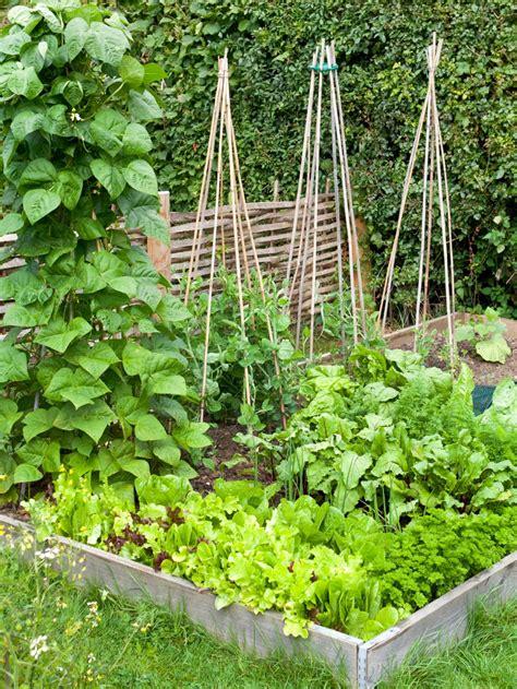 small vegetable garden ideas memes