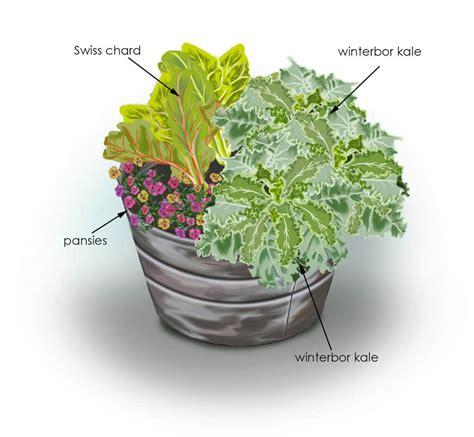 kale color chard container garden bonnie plants