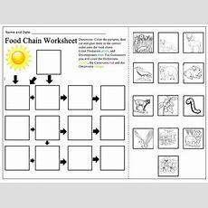 Food Chain Worksheet By Alexandra Smith  Teachers Pay Teachers