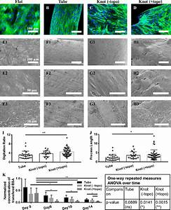 The Topographical Microenvironment Guides Podocytes