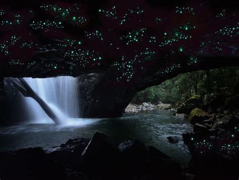 springbrook national park glowworm cave visit gold coast