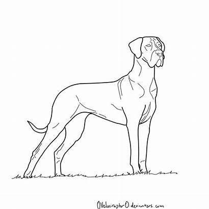 Dane Coloring Dog Pages Draw Sketch Lineart