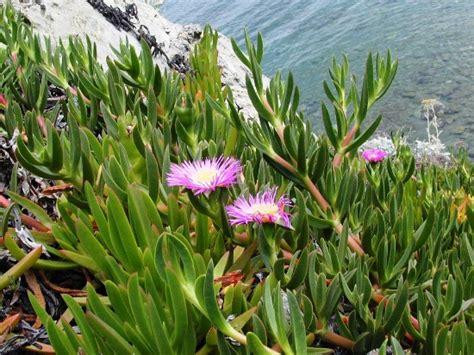liste des taxons de l ecosyst 232 me m 233 diterran 233 en poss 233 dant le caract 232 re morphologie fleur
