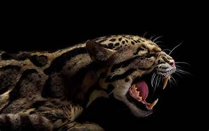 29 Aggressive Tiger Wallpaper, Pictures, Photos & Images ...