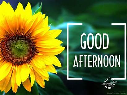 Afternoon Desicomments Goodafternoon Friends Graphics Says