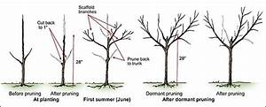 Time To Prune Fruit Trees