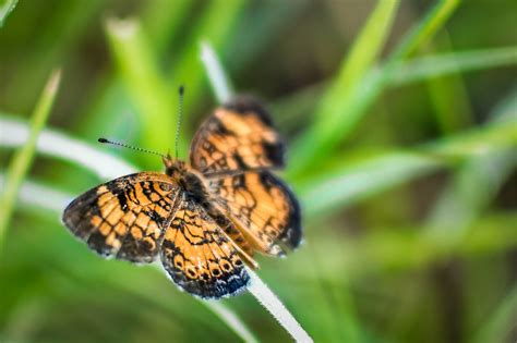 butterfly macro green orange nature insect grass