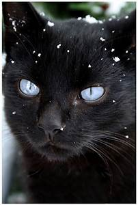 Cute Black Cats With Blue Eyes | Car Interior Design
