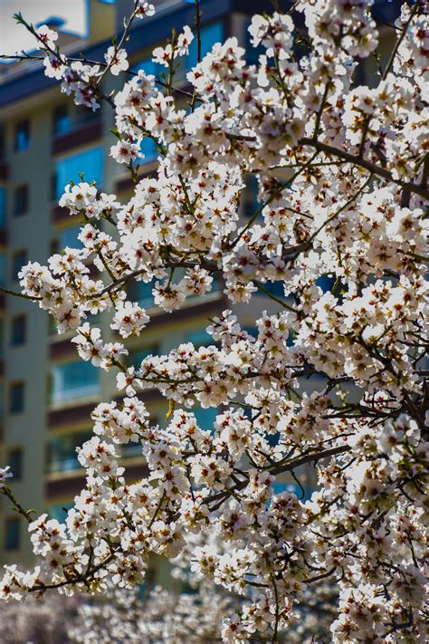 Free Images : landscape branch plant white flower