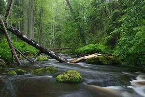 Nature photography - Wikipedia
