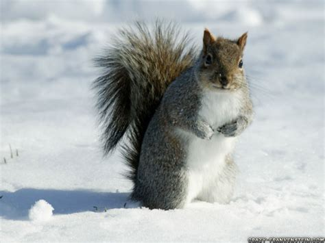 Free Winter Animal Wallpaper - free winter animal wallpaper wallpapersafari