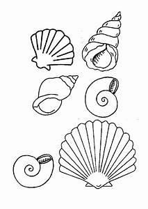 Comment Dessiner La Mer : 18 dessins de coloriage coquillage imprimer ~ Dallasstarsshop.com Idées de Décoration