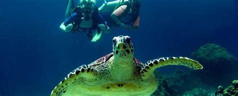 bureau dyk dykning