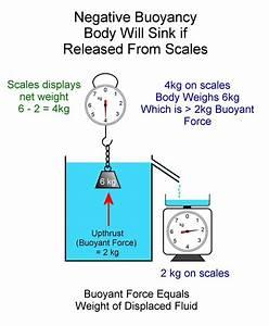 30 Buoyant Force Free Body Diagram
